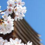 2012〜桜〜談山神社 多武峰